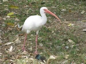 water birds of florida
