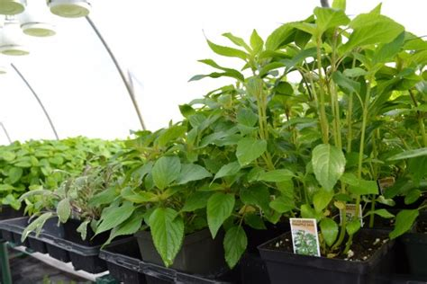 駑ission de cuisine sur 2 comment devenir un bon jardinier m 233 lissa bradette toit