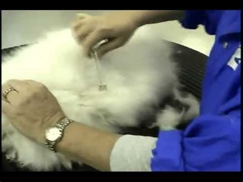 safe mat removal for haired cats with