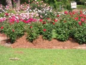 small garden landscape plans photograph rose garden ideas