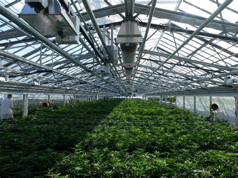 Greenhouse Lighting Fixtures Growing Greenhouse Cannafo Cannabis Information Marijuana Cannafo