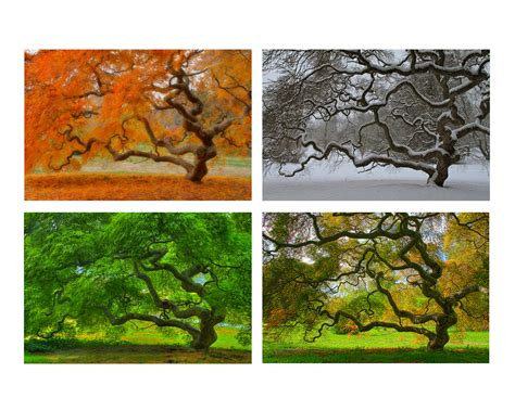 4x6 print set four seasons landscape photography tree of
