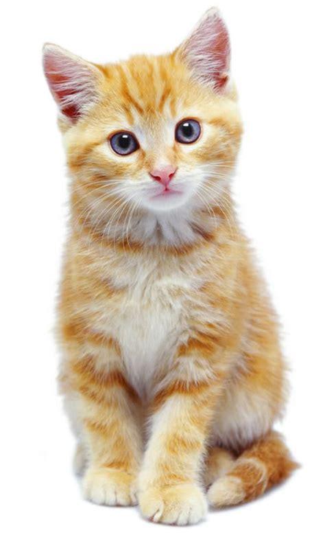 Cat Eye Rafflesia Orange nala house of wiki fandom powered by wikia