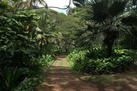 the park picture of national tropical botanical garden