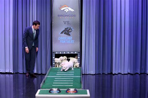 jimmy fallon puppy predictor bowl 2016 puppies make predictions on fallon time