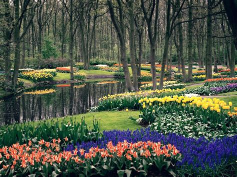 Define Botanical Garden 20 Keukenhof Wallpapers Hd Widescreen Desktop Backgrounds