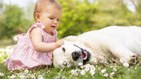 neonati in cani e neonati come abituare il all arrivo di un bambino
