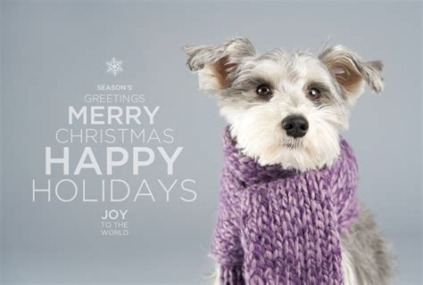 happy holidays minneapolis st paul pet photography joy sessions