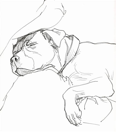 pitbull coloring pages pitbull coloring pages for adults coloring pages