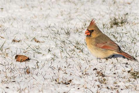 nj backyard birds nj backyard birds outdoor goods