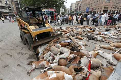 picure of women with a lot if pubic hair 700 perros vagabundos son envenenados en pakist 225 n fuertes