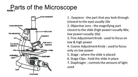what part of the microscope regulates the amount of light which part of the microscope controls the amount of light