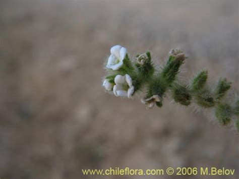Blumen Und Pflanzen 2406 by Beschreibung Und Bilder Nicht Bestimmte Pflanze Sp