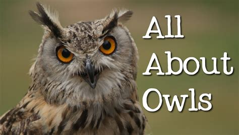 all about owls for kids backyard bird series freeschool