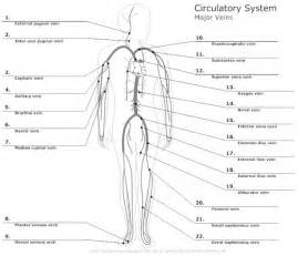 Color Of Oxygenated Blood by Circulatory System Diagram Types Of Circulatory System