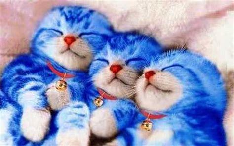 Bg244 Batu Gambar Jari Telunjuk kucing cantik lucu dan imut kata lucu