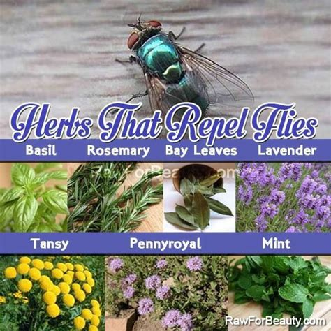 plants that repel flies trees and plants pinterest