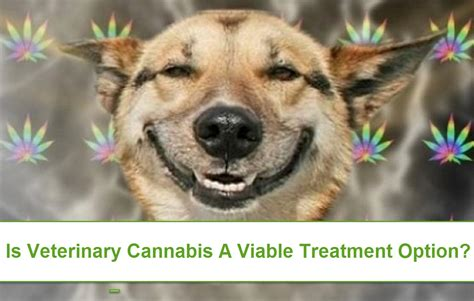 cannabis for dogs cannabis for pets kush for cats dope for dogs