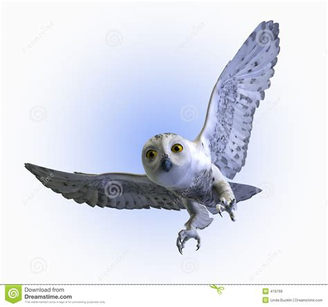 Canon Papercraft Snowy Owl - snowy owl swooping includes clipping path royalty
