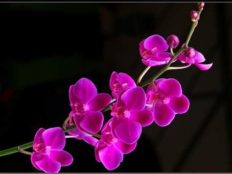 images of beautiful flowers beautiful flowers daydreaming wallpaper 19623832 fanpop