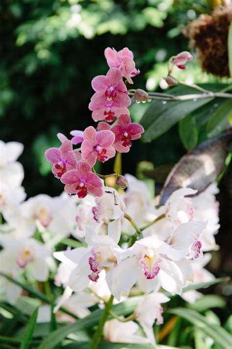 nyc guide the orchid show at the new york botanical
