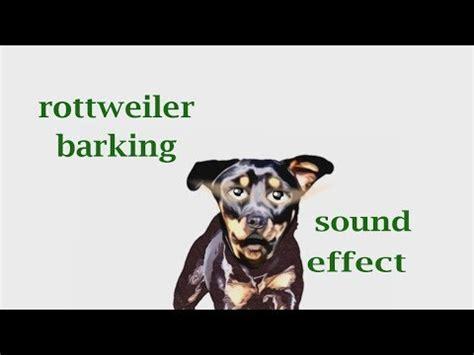 rottweiler barking sounds how a rottweiler barking sound effect animation