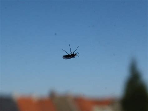 Pest Management Getting Rid Of Those Little Flies Gnats Tiny Gnats In House