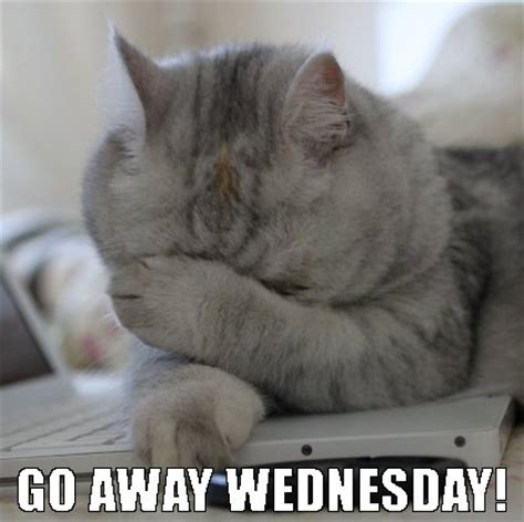 Funny Memes About Wednesday - face palm maze caricatures cats and mobile casino