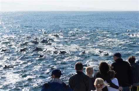 charter boats monterey bay custom charters monterey bay blue ocean whale watching