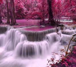 Zebra Wall Murals pink waterfall pictures photos and images for facebook
