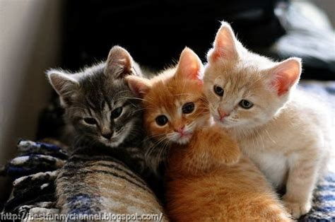 three cute kittens cute and funny pictures of animals 43 cats