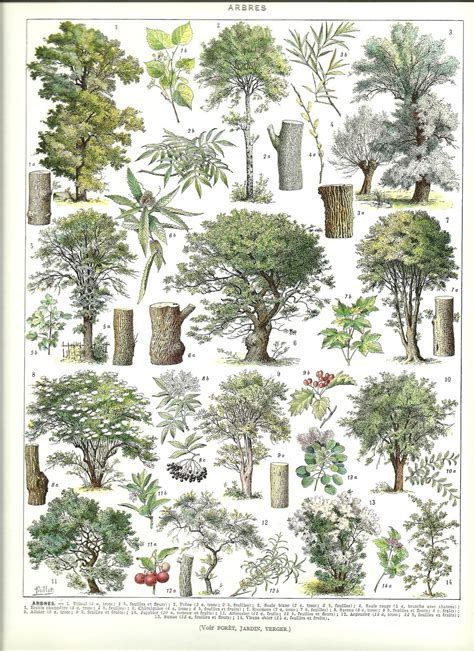vintage trees poster vintage french dictionary botanical