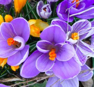 fiori di bach dimagrire fiori di bach possono far perdere peso dietando