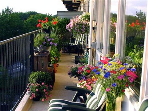 balcony flowers tips for a beautiful balcony