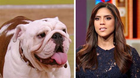 el perro lpez el perro de el dasa mordi 243 a francisca lachapel en pleno show univision