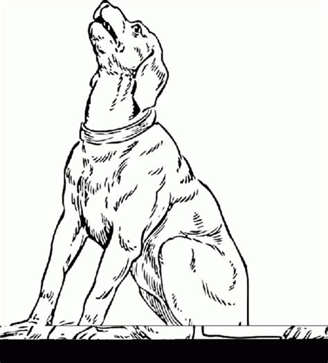 realistic dog coloring pages coloring home realistic coloring pages of animals coloring home