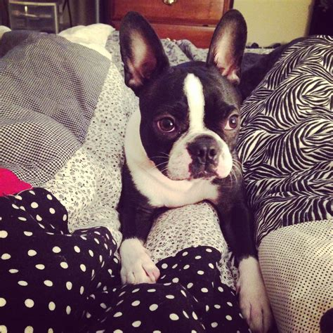 what to do if a eats rat poison what to do when your eats rat poison ibostonterrier