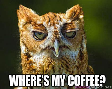 Funny Owl Meme - owl humor mimi stirn artistry llc
