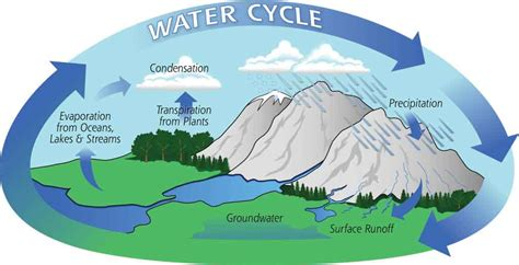water cycle diagram with explanation water cycle process explanation importance of water