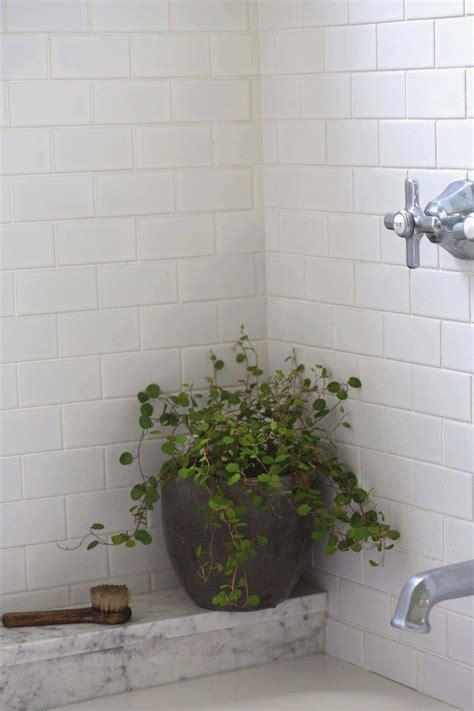 low light bathroom plants best of best houseplants 9 indoor plants for low light