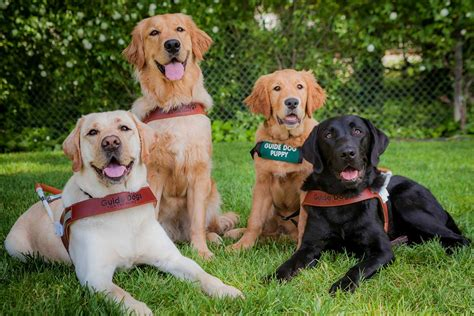dogs walkthrough adaptive aids technology aids and guide dogs