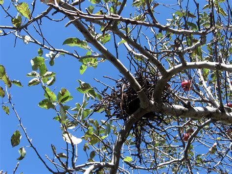 birds nest in tree bird nest in tree