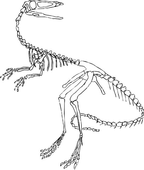 coloring pages of dinosaur bones dinosaur skeleton coloring page dinosaurs pictures and facts