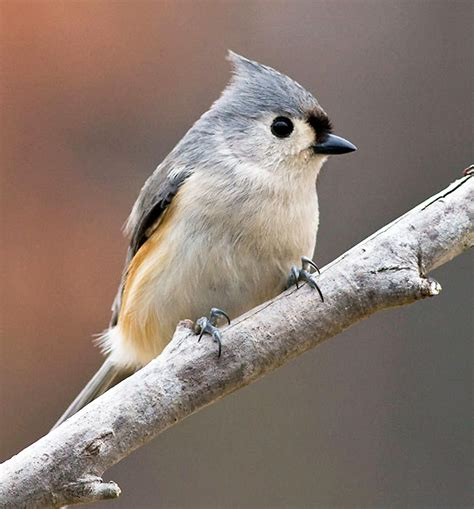 bird feeding basics audubon texas