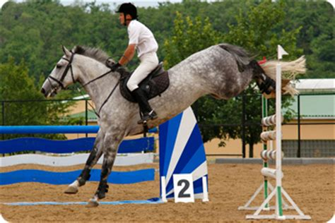scow landing holstein horse breed