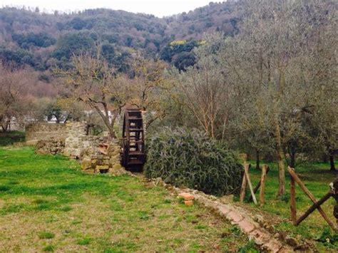 giardino di diana nemi azienda il giardino di diana foto di azienda il giardino