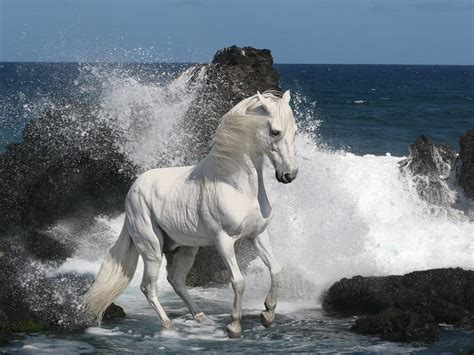white mustang horse white mustang wallpapers and images wallpapers pictures