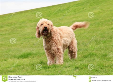 shaggy dogs big shaggy clipart bbcpersian7 collections