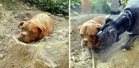 pets alive dogs buried alive saved because of another