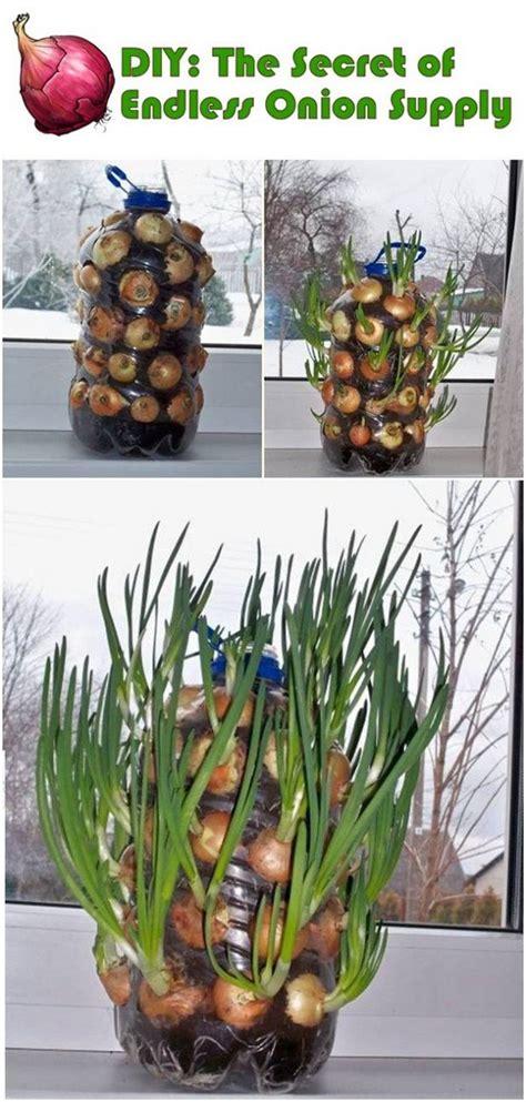 garden decoration hacks 35 creative garden hacks and tips diy home creative